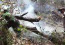 Hutan Lereng Gunung Lewotobi Terbakar, Pelaku Pembakaran Ditahan Polisi